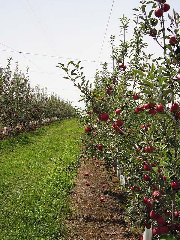 Saliba Fruits