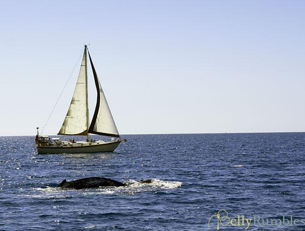 Hervey-Bay-Whales