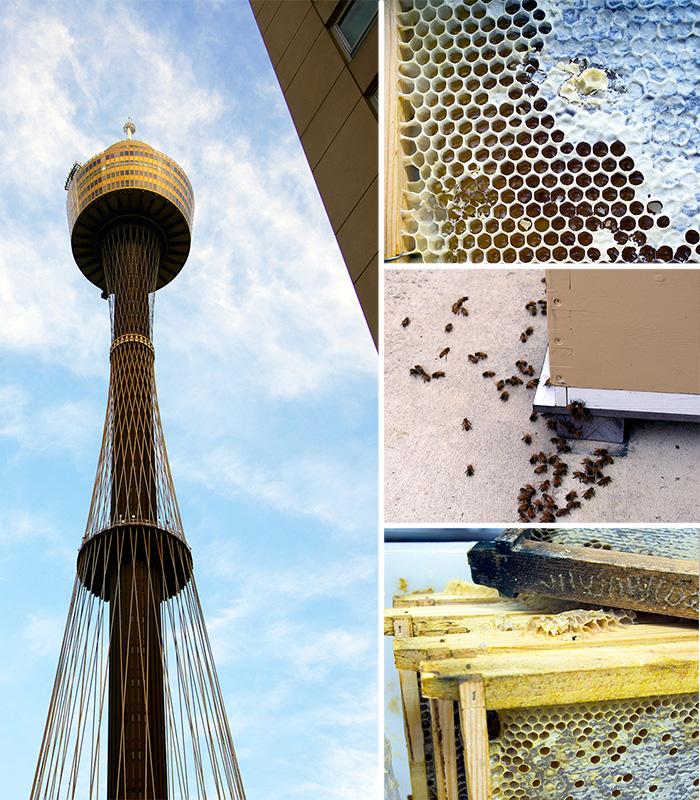 Swissotel-Sydney-Bees