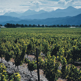 WIN a Stoneleigh Wine 'Wonders of Nature' Readers' Lunch with me
