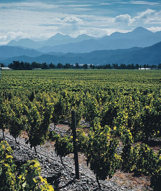 Stoneleigh-vineyard-Feature
