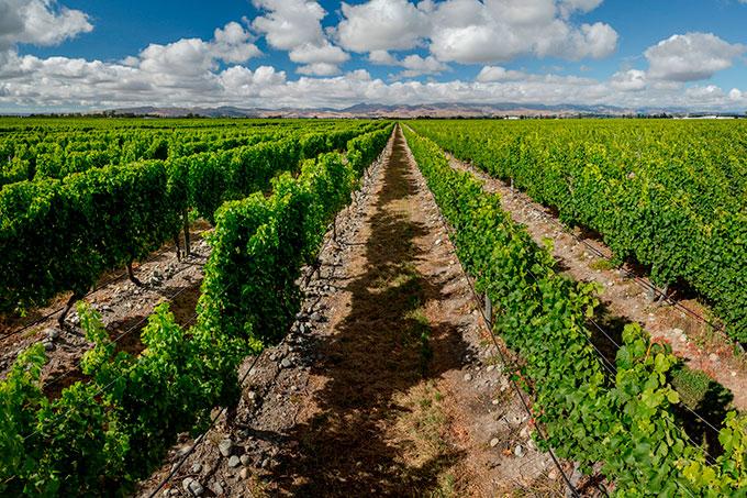 Stoneleigh-vineyards-landscape