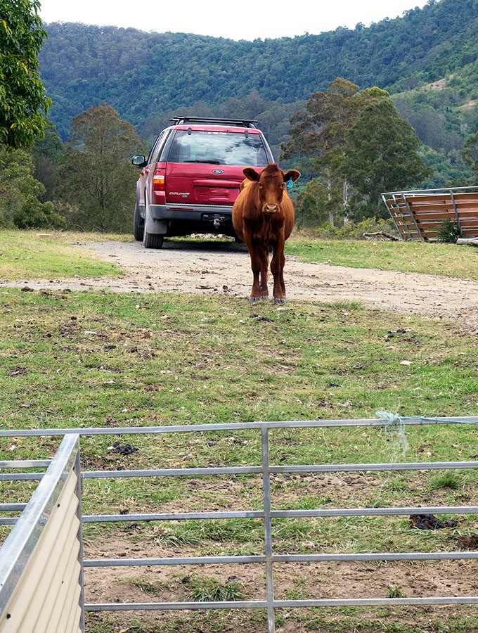 Ewetopia Dairy produces sheep cheeses, jersey cow milk and yoghurt. They also have farm stay accommodation so you can experience farm life. Ewetopia is located in the hinterland of the mid North Coast of NSW near Port Macquarie. Australia.