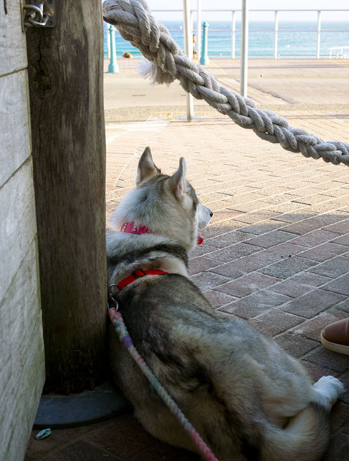 Chilling out and watching the crowds go by at The Bucket List Bondi Beach Sydney, a great dog friendly pub