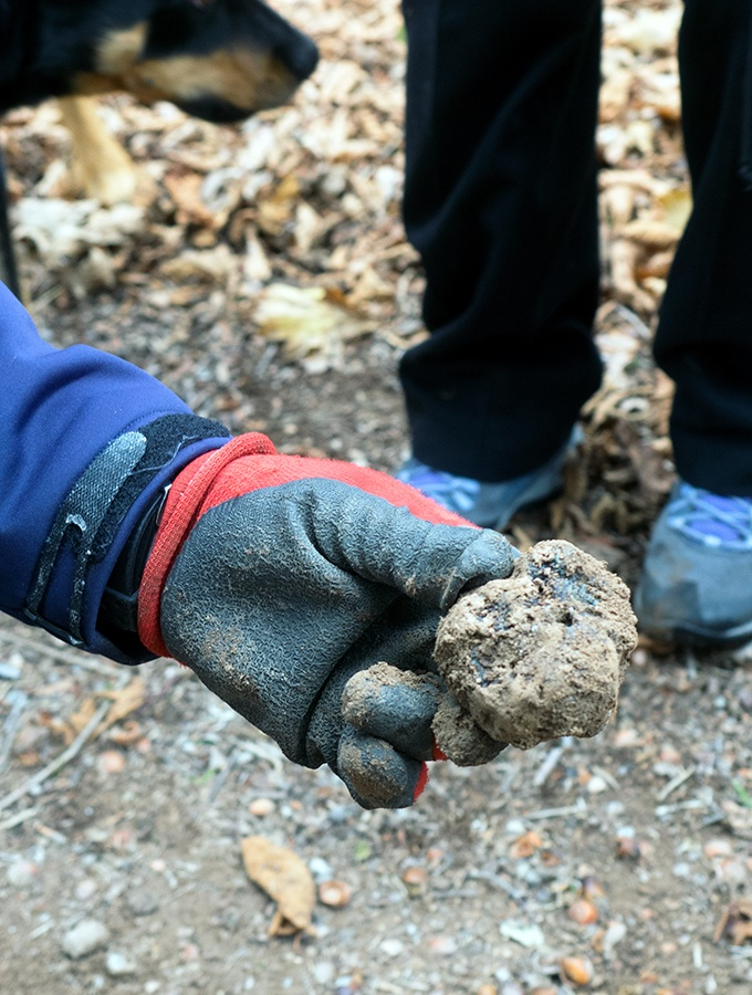 Australia produces some of the best truffles in the world.