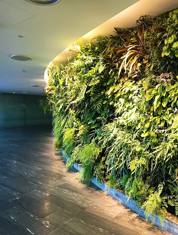 Qantas First Class Lounge Sydney - the living vertical wall entrance to the lounge, planted with over 8,000 plants