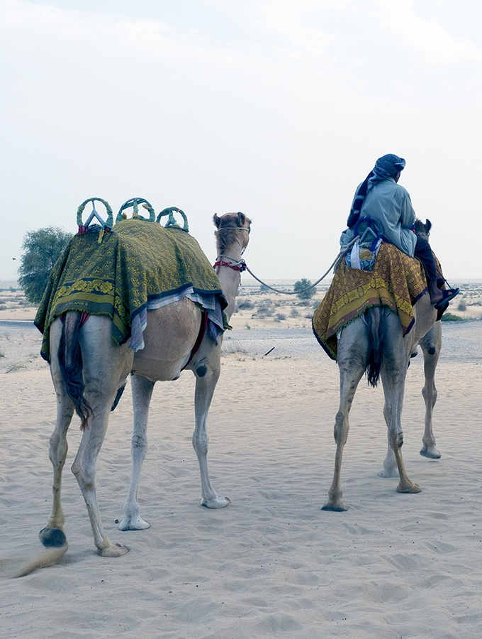Camal safaris in Dubai - Bab Al Shams Resort and Spa
