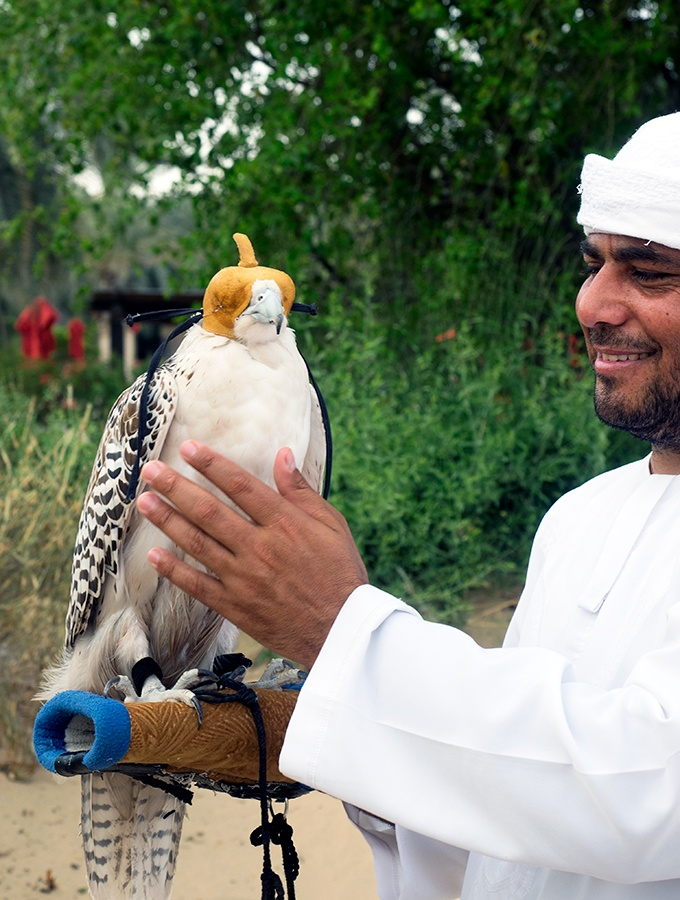 Where to see falcons in Dubai - Bab Al Shams Resort and Spa