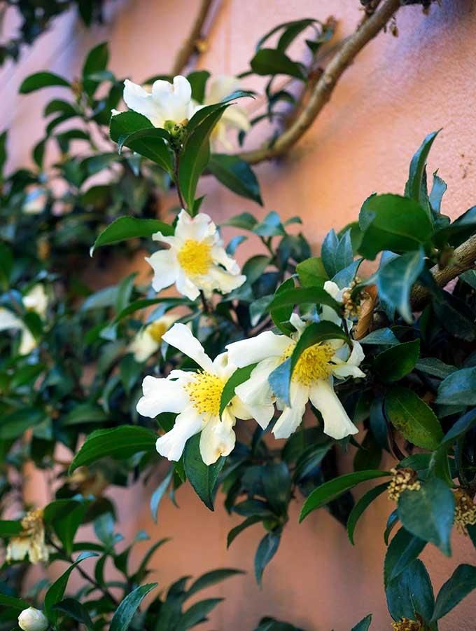 mona farm the coach house flowers