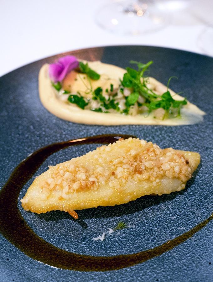 Hauraki Gulf John Dory, macadamia, cauliflower, tuatua fricassee