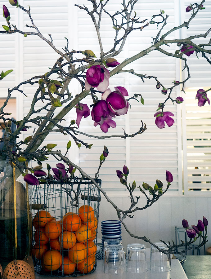 pink magnolias in a vase with a basket of oranges in front