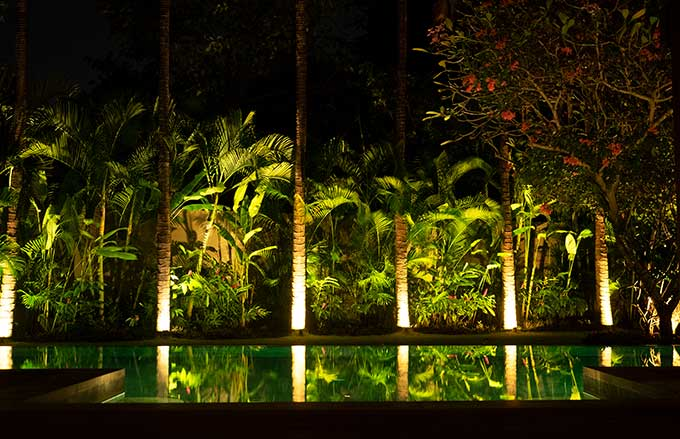 palm trees at night reflecting in the pool