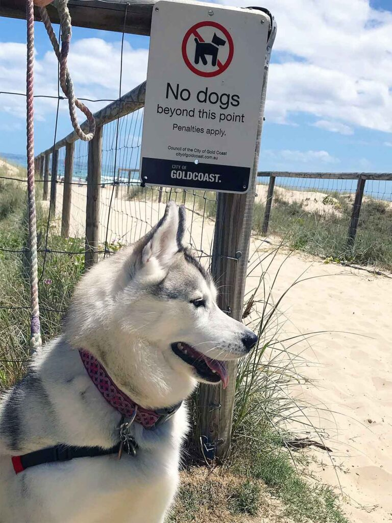dog sitting near no dogs on the beach sign