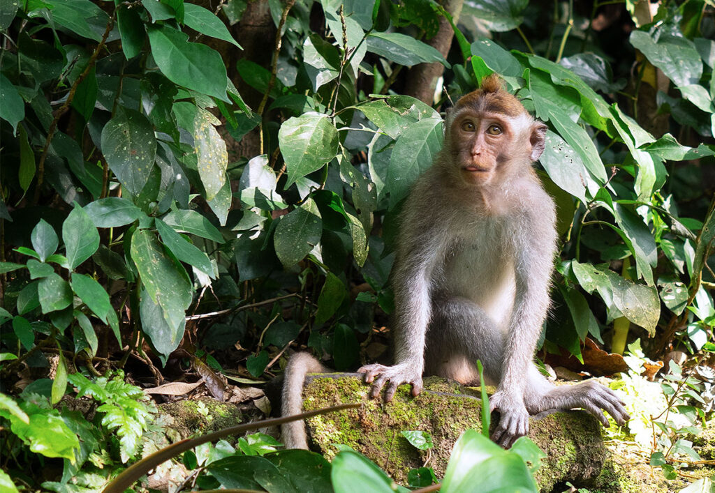 monkey sitting in front of some leaves